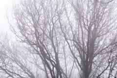 Απομονωμένοι κλάδοι πέρα από τον άσπρο ουρανό Μαύροι γυμνοί κλάδοι δέντρων στο wh Στοκ φωτογραφία με δικαίωμα ελεύθερης χρήσης