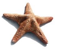 απομονωμένος αστερίας στοκ εικόνα