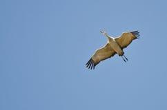 Απομονωμένος γερανός Sandhill που πετά σε έναν μπλε ουρανό Στοκ φωτογραφίες με δικαίωμα ελεύθερης χρήσης