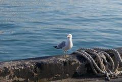 Απομονωμένος γλάρος Στοκ φωτογραφία με δικαίωμα ελεύθερης χρήσης