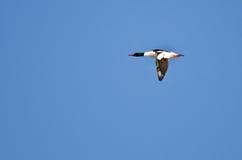 Απομονωμένος κοινός μέργος που πετά στο μπλε ουρανό Στοκ εικόνες με δικαίωμα ελεύθερης χρήσης