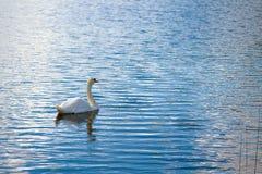 Απομονωμένος κολύμπησε την κολύμβηση στη λίμνη στοκ φωτογραφίες με δικαίωμα ελεύθερης χρήσης