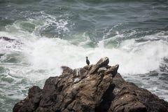 Απομονωμένος κορμοράνος Στοκ φωτογραφία με δικαίωμα ελεύθερης χρήσης