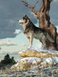 απομονωμένος λύκος διανυσματική απεικόνιση