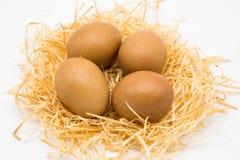 Απομονωμένος τέσσερα αυγά με τη φωλιά στοκ φωτογραφία με δικαίωμα ελεύθερης χρήσης