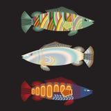 Απομονωμένος τρία φανταστικά ζωηρόχρωμα ψάρια Στοκ Φωτογραφία