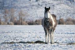 Απομονωμένο άλογο στη ροδοκόκκινη κοιλάδα βουνών Στοκ Εικόνες