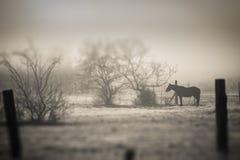 Απομονωμένο άλογο στοκ φωτογραφία με δικαίωμα ελεύθερης χρήσης
