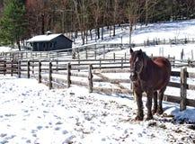Απομονωμένο άλογο Στοκ εικόνα με δικαίωμα ελεύθερης χρήσης