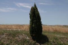 Απομονωμένο δέντρο κυπαρισσιών στο τοπίο της Τοσκάνης Στοκ εικόνες με δικαίωμα ελεύθερης χρήσης