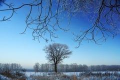 απομονωμένο δέντρο μεταξύ του χειμερινού τομέα Στοκ Φωτογραφίες