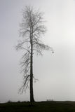 απομονωμένο δέντρο ομίχλης Στοκ Φωτογραφία
