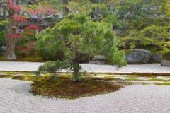 Απομονωμένο δέντρο πεύκων στον ιαπωνικό κήπο Στοκ Εικόνες