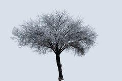 Απομονωμένο δέντρο σε μια θύελλα χιονιού Στοκ Εικόνες