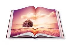 Απομονωμένο δέντρο σε μια Τοσκάνη wheatfield - Ιταλία - που ανοίγουν photobook Στοκ εικόνες με δικαίωμα ελεύθερης χρήσης