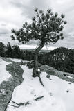 Απομονωμένο δέντρο σε Winterscape Στοκ Εικόνες