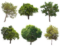 Απομονωμένο δέντρο στο άσπρο υπόβαθρο διανυσματική απεικόνιση