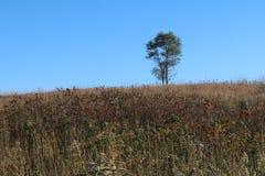 Απομονωμένο δέντρο στο λιβάδι Στοκ φωτογραφία με δικαίωμα ελεύθερης χρήσης