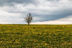Απομονωμένο δέντρο στο κίτρινο λιβάδι 2 Στοκ Φωτογραφία