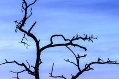 απομονωμένο δέντρο Στοκ Εικόνες