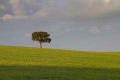 απομονωμένο δέντρο Στοκ εικόνα με δικαίωμα ελεύθερης χρήσης