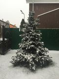 απομονωμένο έλατο λευκό δέντρων στοκ εικόνες
