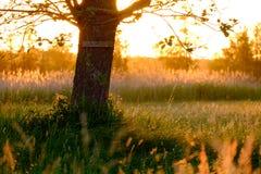 απομονωμένο ανασκόπηση λευκό δέντρων άνοιξη Στοκ εικόνα με δικαίωμα ελεύθερης χρήσης