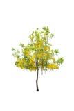 απομονωμένο ανασκόπηση λευκό δέντρων Στοκ Εικόνες