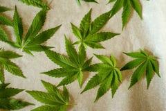 απομονωμένο ανασκόπηση λευκό μαριχουάνα φύλλων Στοκ Φωτογραφία