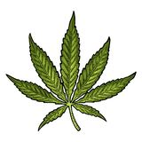 απομονωμένο ανασκόπηση λευκό μαριχουάνα φύλλων Εκλεκτής ποιότητας μαύρη διανυσματική απεικόνιση χάραξης ελεύθερη απεικόνιση δικαιώματος