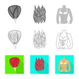 Απομονωμένο αντικείμενο της ίνας και του μυϊκού σημαδιού Συλλογή της διανυσματικής απεικόνισης αποθεμάτων ινών και σωμάτων ελεύθερη απεικόνιση δικαιώματος