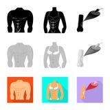 Απομονωμένο αντικείμενο της ίνας και του μυϊκού συμβόλου Συλλογή της διανυσματικής απεικόνισης αποθεμάτων ινών και σωμάτων διανυσματική απεικόνιση