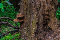 απομονωμένο δάσος λευκό μανιταριών στοκ εικόνες