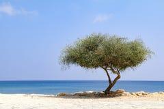 Απομονωμένο δέντρο εκτός από τη θάλασσα την ηλιόλουστη ημέρα με το μπλε ουρανό στοκ εικόνες