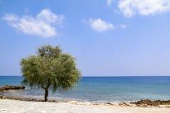 Απομονωμένο δέντρο εκτός από τη θάλασσα την ηλιόλουστη ημέρα με το μπλε ουρανό στοκ φωτογραφία