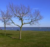 απομονωμένο δέντρο παραλ&iot Στοκ Εικόνες