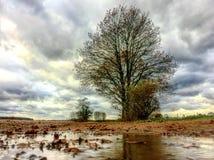 Απομονωμένο δέντρο που απεικονίζεται σε μια λακκούβα Στοκ φωτογραφία με δικαίωμα ελεύθερης χρήσης