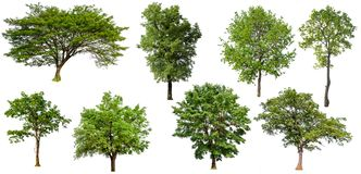 Απομονωμένο δέντρο συλλογής στοκ εικόνα