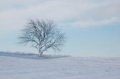Απομονωμένο δέντρο το χειμώνα Στοκ εικόνα με δικαίωμα ελεύθερης χρήσης