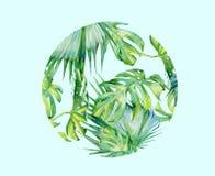 Απομονωμένο διανυσματικό deocration φύλλων πράσινων φυτών watercolor ελεύθερη απεικόνιση δικαιώματος