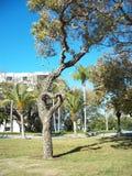 απομονωμένο λευκό δέντρων αγάπης έννοιας καρδιά Στοκ φωτογραφία με δικαίωμα ελεύθερης χρήσης