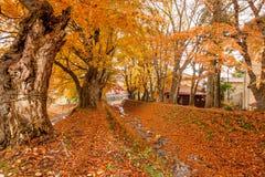 απομονωμένο λευκό δέντρων σφενδάμνου Στοκ φωτογραφία με δικαίωμα ελεύθερης χρήσης