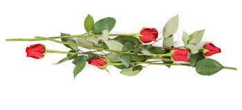 απομονωμένο λευκό τριαντ Στοκ Εικόνες