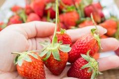 απομονωμένο λευκό φραουλών ανασκόπησης καρπός Στοκ εικόνες με δικαίωμα ελεύθερης χρήσης