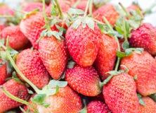 απομονωμένο λευκό φραουλών ανασκόπησης καρπός Στοκ Φωτογραφίες