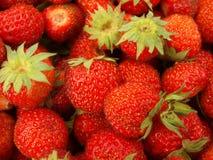 απομονωμένο λευκό φραουλών ανασκόπησης καρπός Στοκ Φωτογραφία