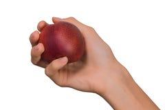 Απομονωμένο θηλυκό χέρι γυναικών που κρατά ένα κόκκινο ροδάκινο φρούτων σε ένα άσπρο υπόβαθρο Στοκ εικόνα με δικαίωμα ελεύθερης χρήσης
