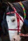 Απομονωμένο κεφάλι αλόγων με το κόκκινο νήμα συνδεδεμένο στοκ εικόνες