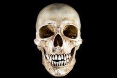 Απομονωμένο κεφάλι σκελετών Στοκ φωτογραφία με δικαίωμα ελεύθερης χρήσης