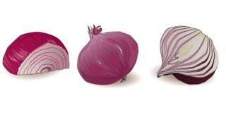 Απομονωμένο κρεμμύδι διάνυσμα Στοκ Εικόνα